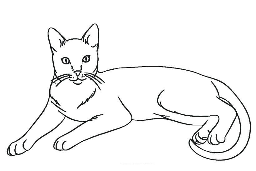 warrior cat cartoon coloring pages - photo#49